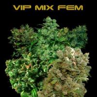 VIP Seeds VIP Female Mix Feminized