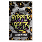 Purple Punch x Do-Si-Dos - Feminized - Ripper Seeds