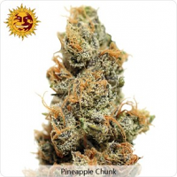 Barney's Farm Seeds Pineapple Chunk Feminised
