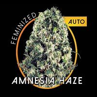 Vision Seeds Amnesia Haze Auto Feminized