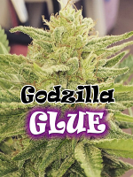 Godzilla Glue - Feminized - Dr Underground