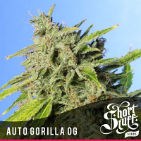 Shortstuff Seeds Auto Gorilla O.G. Feminized