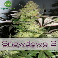 Alphakronik Genes Seeds Snowdawg 2 Regular