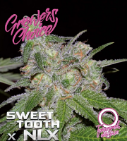 Sweet Tooth x NLX Auto - Feminized - Growers Choice