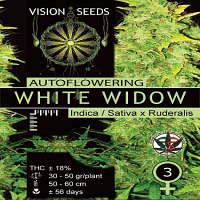 Vision Seeds White Widow Auto Feminized