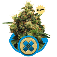 Royal Queen Seeds Painkiller XL Feminized