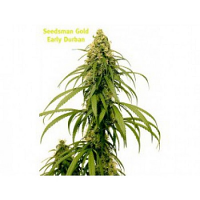 Seedsman Seeds Early Durban Regular