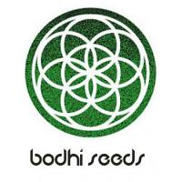 Bodhi Seeds Dragon Fruit Regular