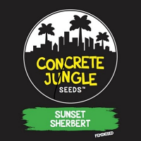 Concrete Jungle Seeds Sunset Sherbert Feminized