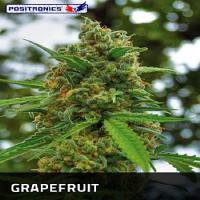 Positronics Seeds Grape Fruit Feminised