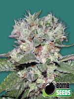 Bomb Seeds CBD Bomb Feminized