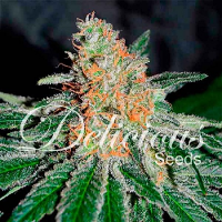 Delicious Seeds CBD Jam Feminized