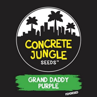 Concrete Jungle Seeds Grand Daddy Purple Feminized