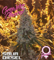 Sour Diesel - Feminized - Growers Choice