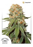 Dutch Passion Seeds Orange Bud Regular