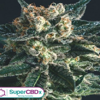 SuperCBDx Seeds AK47 x SCBDx Feminized