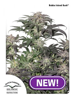 Bubba Island Kush® Feminized Cannabis Seeds by Dutch Passion Seeds