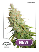 Dutch Passion Seeds Auto Desfrán Feminized
