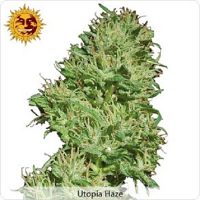 Barney's Farm Seeds Utopia Haze Feminized