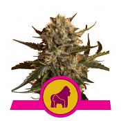 Mother Gorilla - Feminized - Royal Queen Seeds