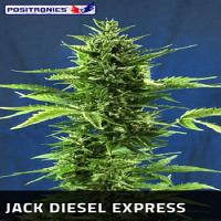 Positronics Seeds Jack Diesel Express Auto Feminized