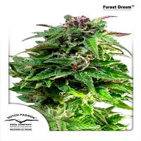 Dutch Passion Seeds Forest Dream Feminized