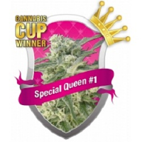 Royal Queen Seeds Special Queen #1 Feminized (PICK N MIX)