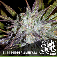 Shortstuff Seeds Auto Purple Amnesia Feminized