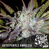 Shortstuff Seeds Auto Purple Amnesia Feminized