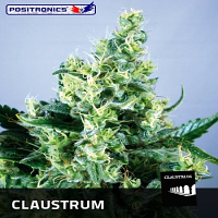 Positronics Seeds Claustrum Feminized (PICK N MIX)