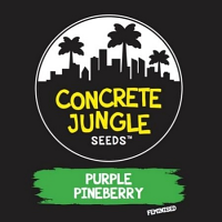 Concrete Jungle Seeds Purple Pineberry Feminized