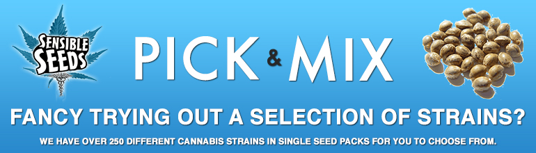 Pick N Mix cannabis Seeds from Sensible Seeds