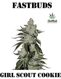 FastBuds Seeds Girl Scout Cookies Auto Feminized