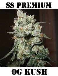 Sensible Seeds Premium Selection OG Kush Feminized