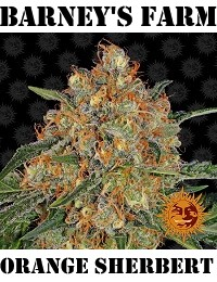 Barneys Farm Seeds Orange Sherbert Feminized