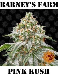 Barneys Farm Seeds Pink Kush Feminized