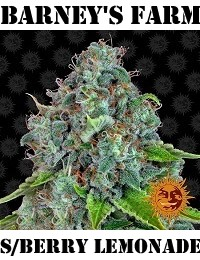 Barneys Farm Seeds Strawberry Lemonade Feminized